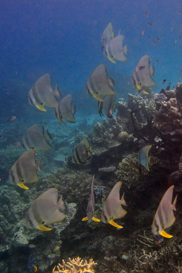 sito di incontri di pesce