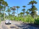 Parchi nazionali del Cile
