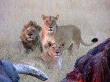 Leoni in Botswana