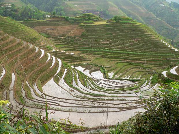 Viaggio in Cina a Guilin e Longsheng. Le risaie a terrazze di Longji ...