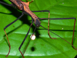Risultati immagini per insetti amazzonia