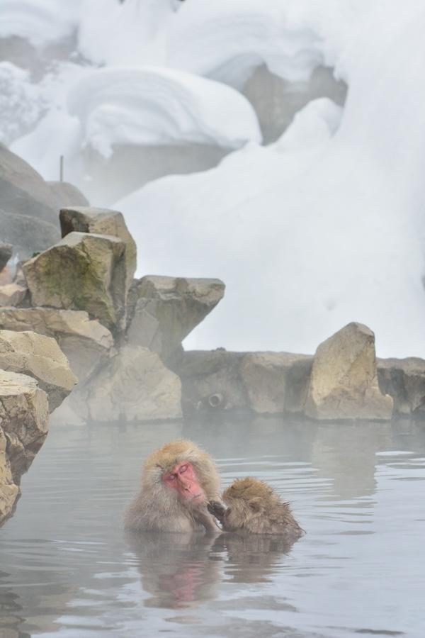 Dove andare per osservare le scimmie delle nevi - Andare spesso in bagno ...
