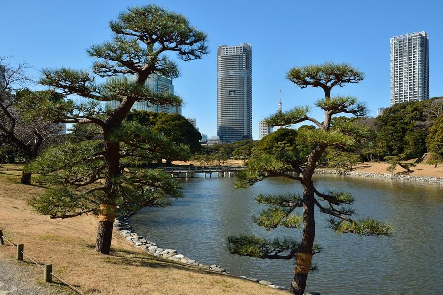 Cosa vedere a tokyo foto ed informazioni sulle principali for Giardino hamarikyu