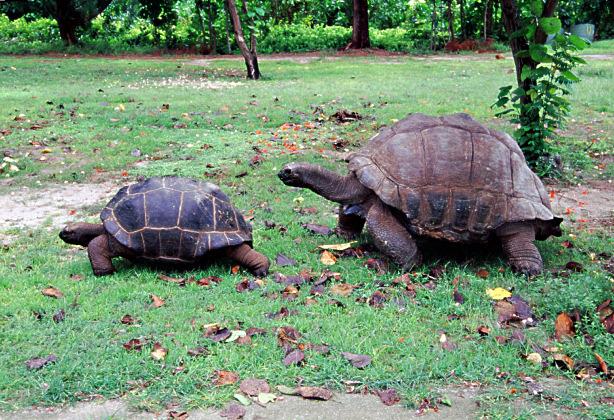 bird island le tartarughe terrestri e la grande colonia